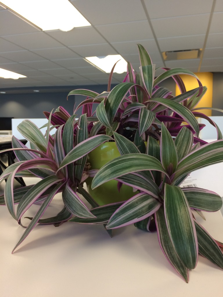 personalize-your-workspace-plant